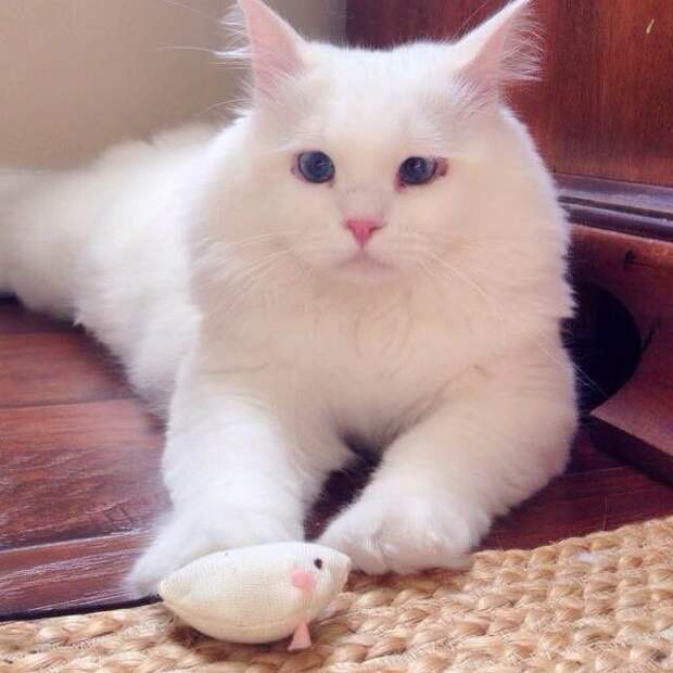 Они нашли котёнка недалеко от дороги... Вы посмотрите в кого он превратился!
