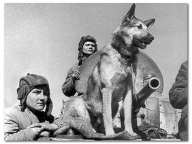 Животные-герои ВОВ: Мы тоже служили Родине