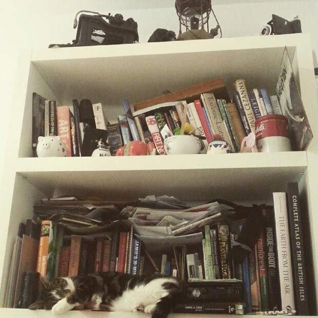 кошки спят, кошки спят в необычных местах