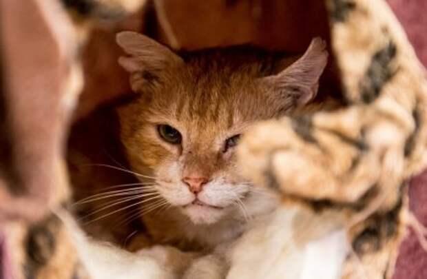 Почему нельзя обижать кошек, приметы