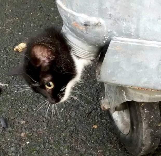 Спасение котенка, застрявшего в мусорном баке