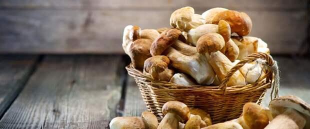 Регулярное потребление грибов снижает риски рака на 45%