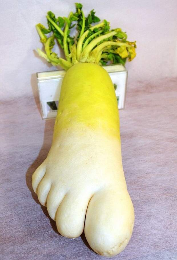 6. Редиска в форме ноги овощи, фрукиы