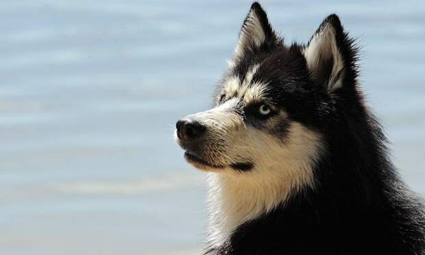 Российские учёные выяснили диету древних собак по окаменевшим фекалиям