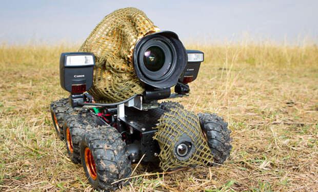 Голодная львица приняла камеру зоологов за объект охоты: видео