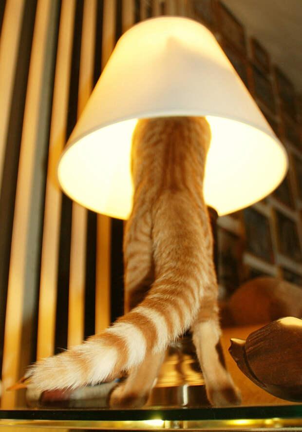 21.  кот, поза