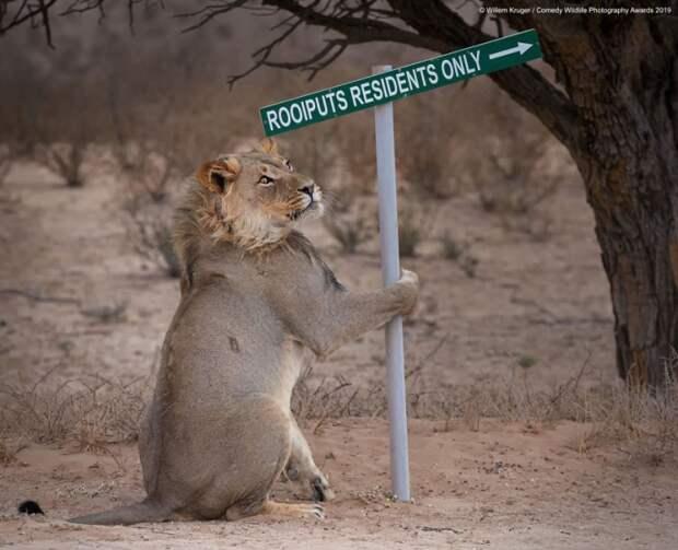 Самые смешные снимки конкурса комедийных фотографий природы