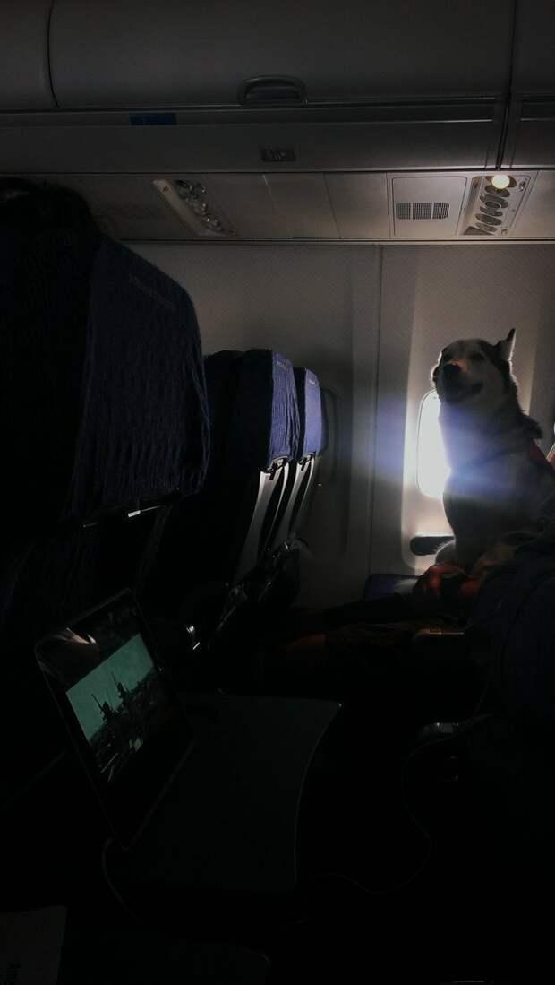 13. А еще не спускают глаз с соседа животные, пассажир, салон, самолет, собака, фотография