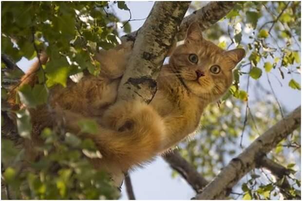 Как кота с дерева снимали...