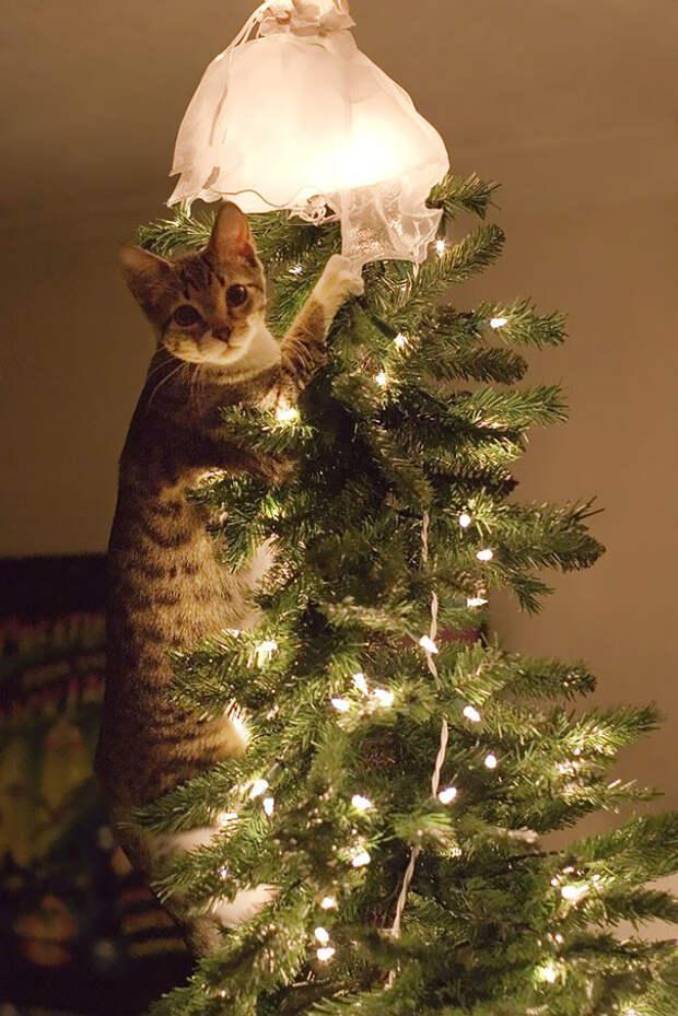 Котейки, которые помогают наряжать елку и делают Новый год незабываемым елка, животные, коты, новой год