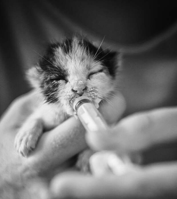 25 животных-малышей, над которыми умилялась сама природа