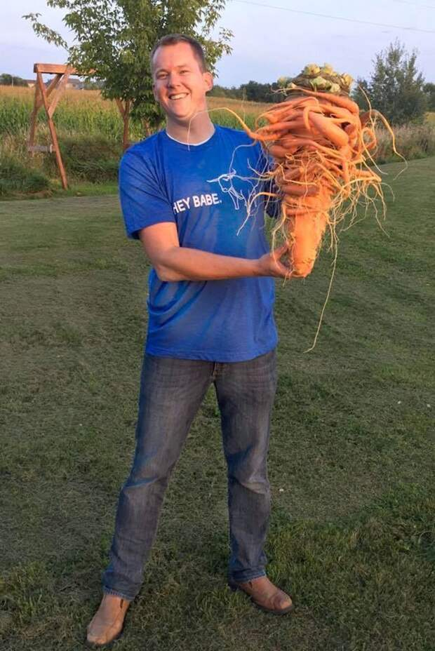 Фермер-любитель вырастил самую большую в мире морковку