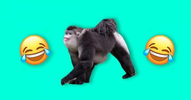 Природа была пьяна, когда создавала этих 8 животных