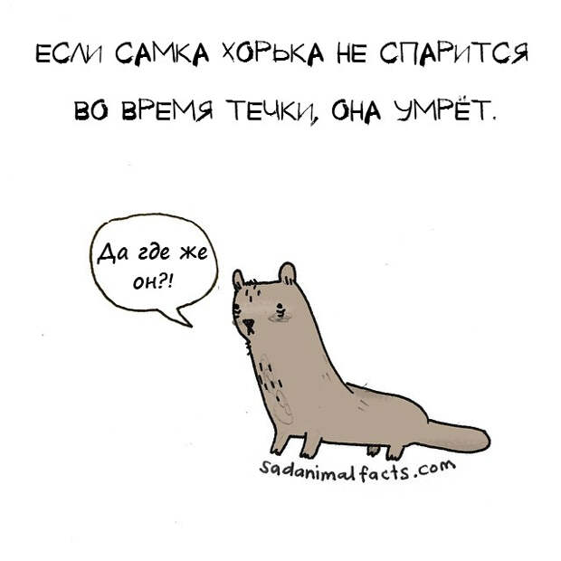 Комикс: 26 ужасно, ужасно грустных фактов о животных