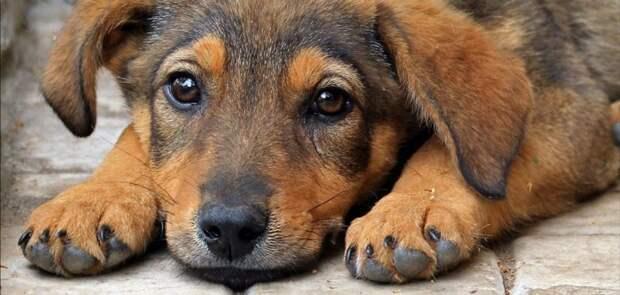 Усилена уголовная ответственность за жестокое обращение с животными УК РФ, УПК РФ, Федеральный закон, жестокое обращение с животными, животные, уголовная отвественность