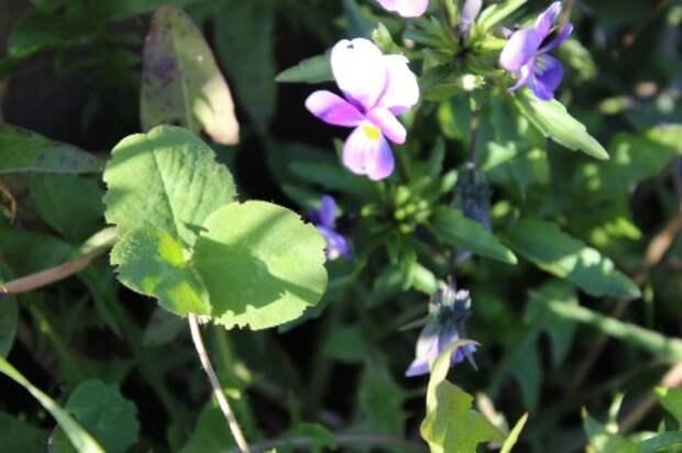Сад — огород на 23.09.2015