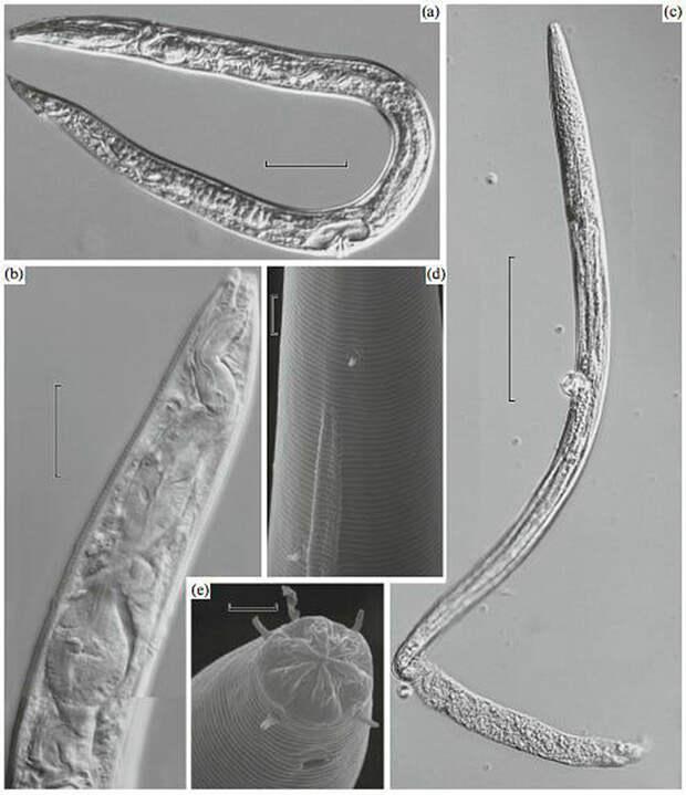 Ученые пробудили из мерзлоты червей, которым 42 ТЫСЯЧИ ЛЕТ! Что с ними стало?