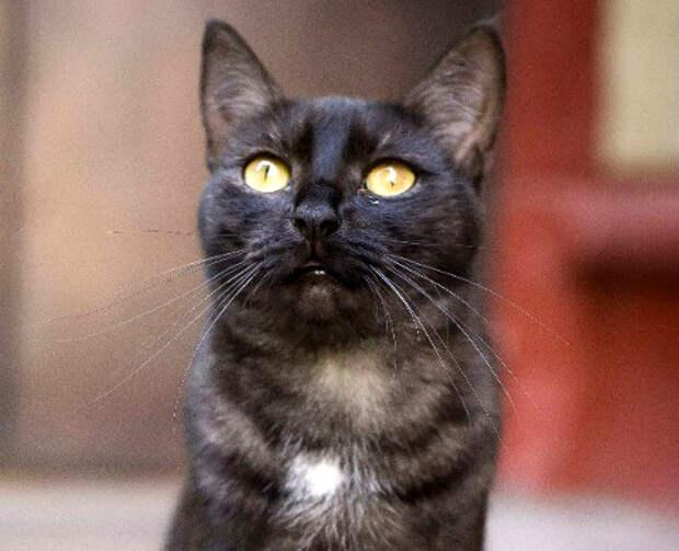 Пятничные котики: кошка Марта в этом теплом мае