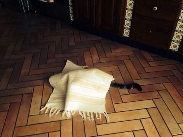 Несколько фотографий, которые доказывают, что все коты — секретные агенты