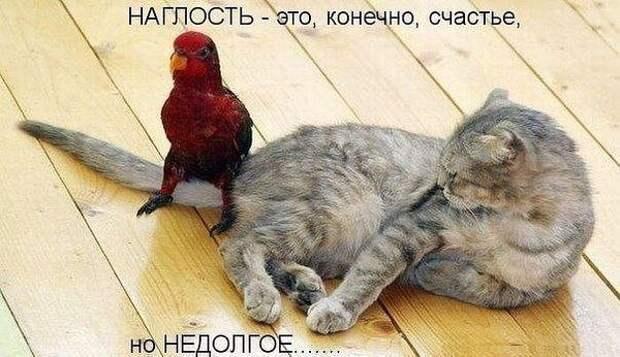 Наши забавные друзья 7.