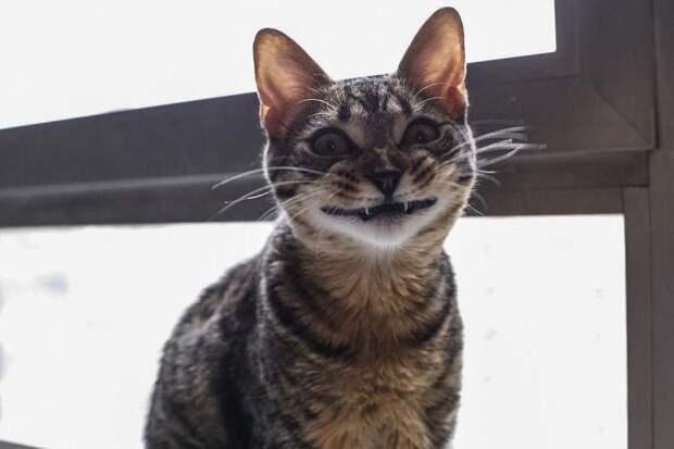 Кажется, этому коту уже хватит кошки, палки, ёлки
