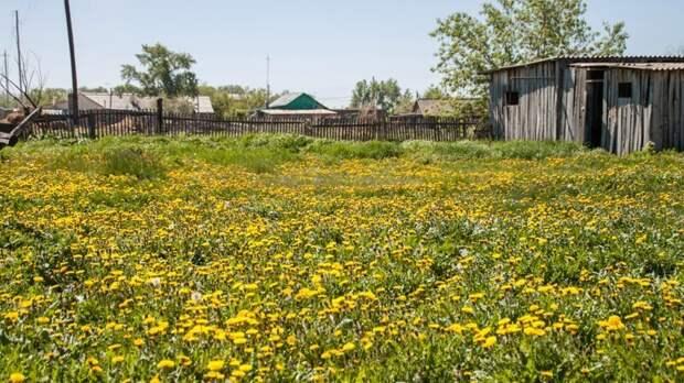 Почему на самом деле вымирает деревня? Мнение местного жителя деревня, мнение, сельское хозяйство, сибирь