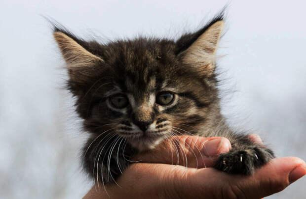 Таких котят мне показывал продавец
