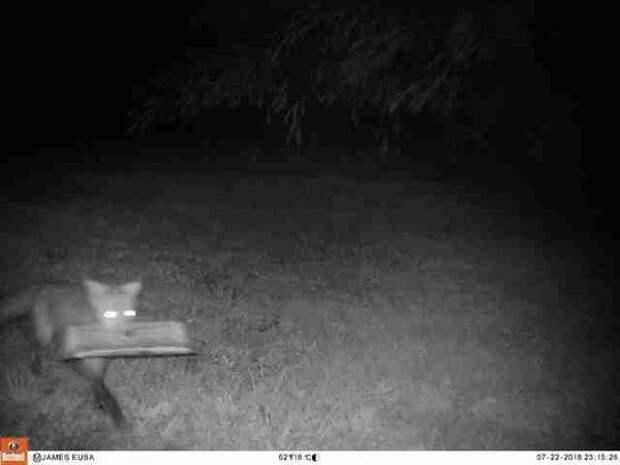 Мужчина устанавливает камеру ночного видения, чтобы узнать, кто приносит ему газеты
