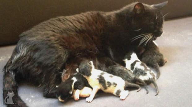 У этой кошки умерли все котята... Но у судьбы были на нее свои планы...