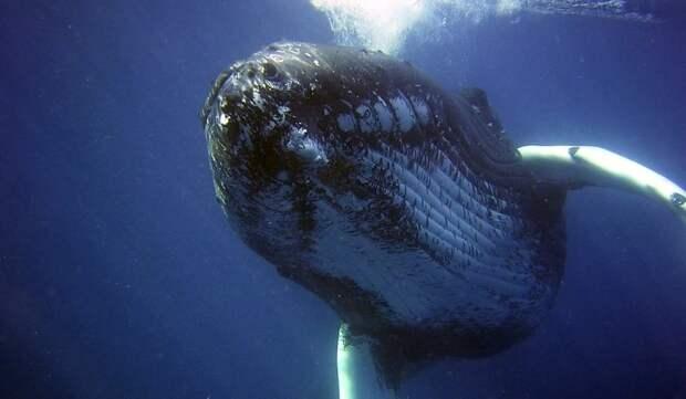 Почти 60 тысяч человек попросили не строить «китовую тюрьму» в Петербурге