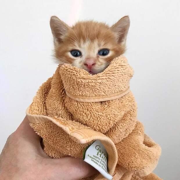 Спасенная, но больная мама-кошка смогла выкормить семерых котят