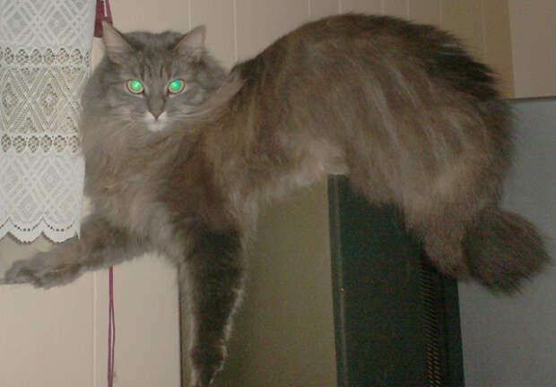 39.  кот, поза