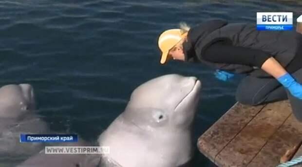 Приморские ученые подобрались к разгадке языка дельфинов