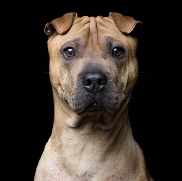 Выразительные портреты животных в объективе Роберта Баху