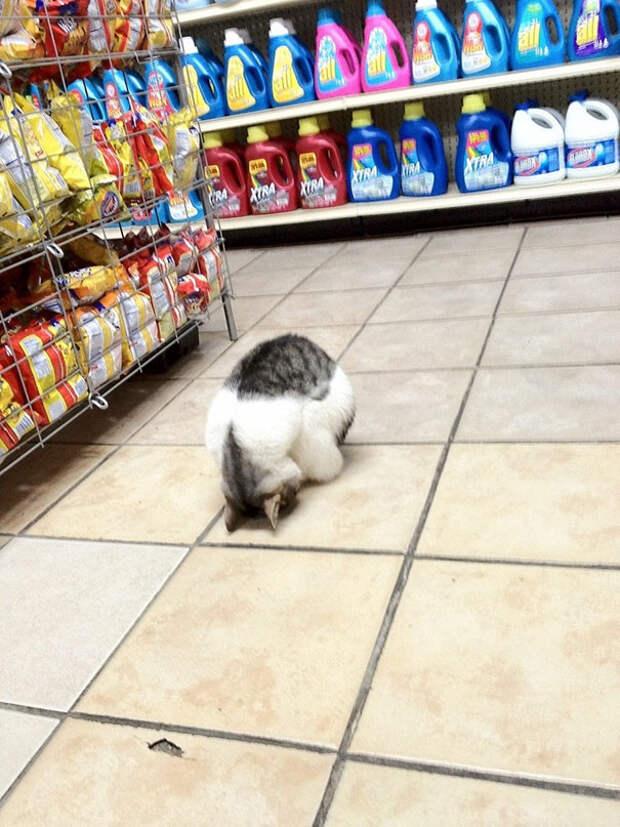 9. Сон в магазине животное, сон