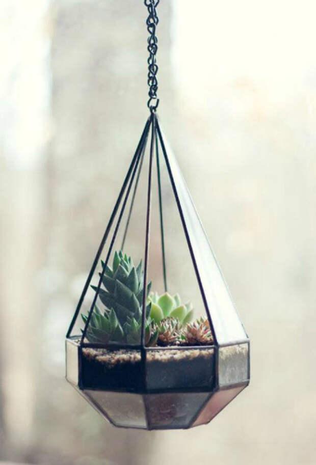 Фантастическая стеклянная капсула с живыми растениями.