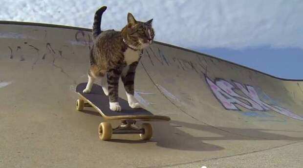 Кошка-скейтбордистка Диджа удивляет своими трюками