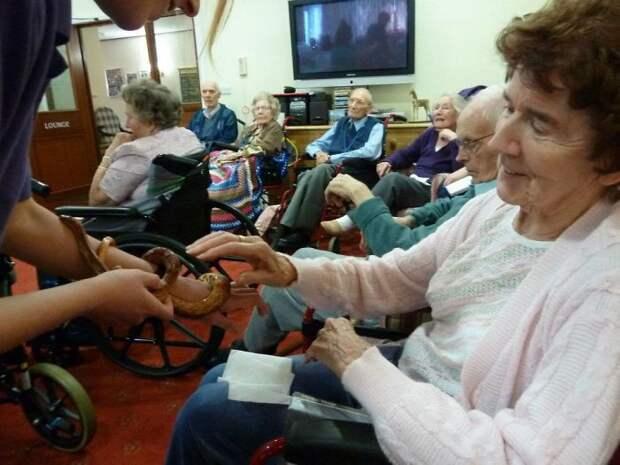 Впервые касается змеи  дом престарелых, животное