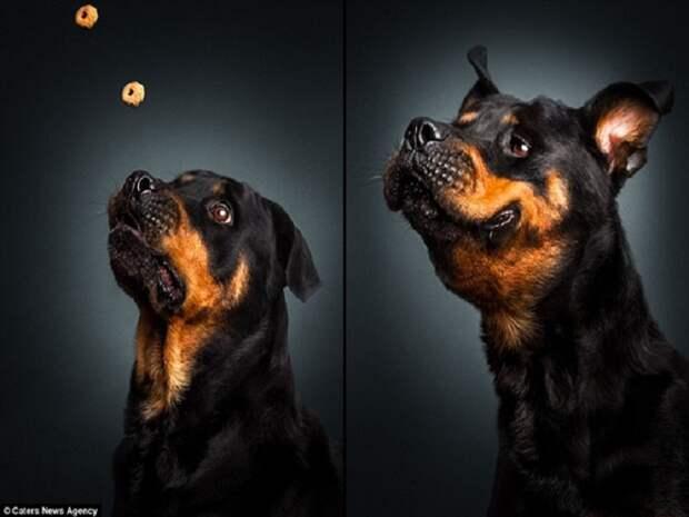 10 зворушливих моментів, коли собака виглядає емоційно - фото 8