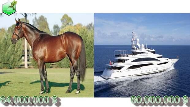 Видео: 20 самых дорогих лошадей в истории