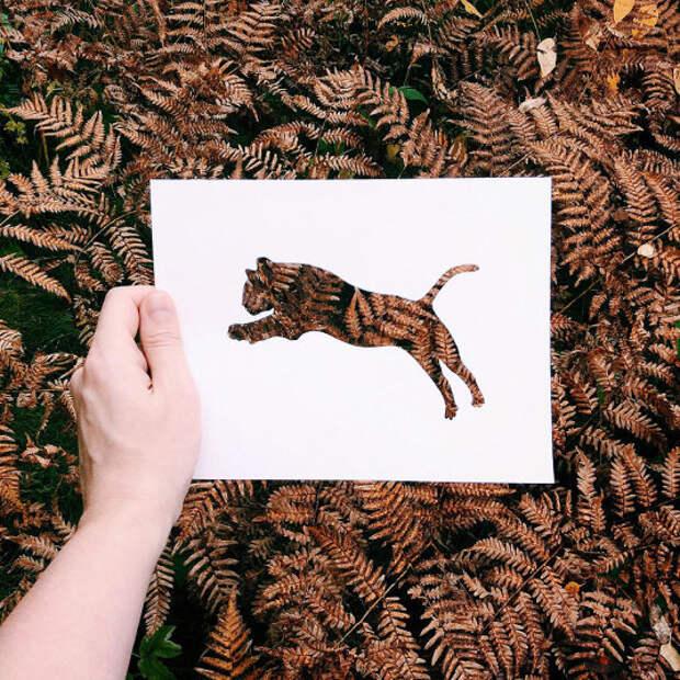 """Животные, """"раскрашенные"""" природой"""
