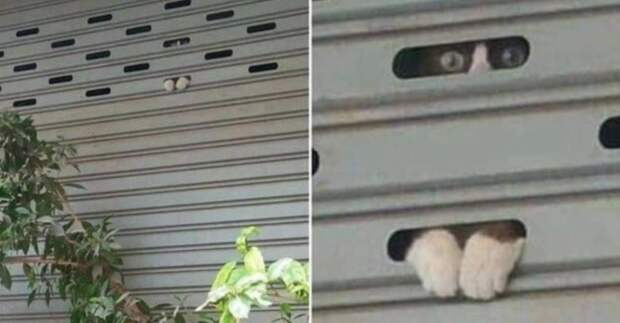 14 котов, с которыми невозможно заскучать