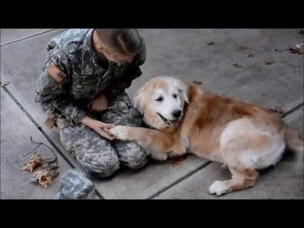 Собака плачет, встречая хозяйку из армии
