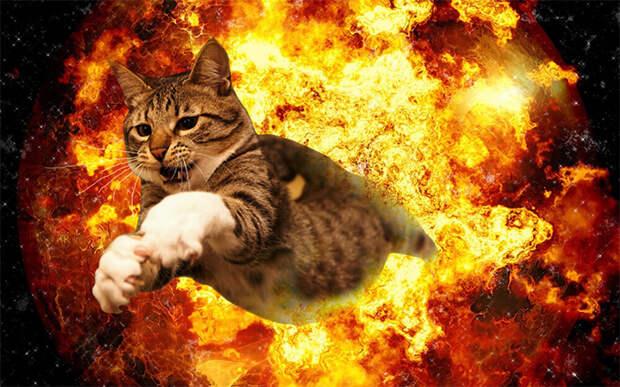 Эти 10 котов косплеят режиссеров и их самые известные работы