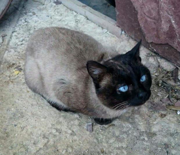Пятничный кот Тоша – брошенный и хороший