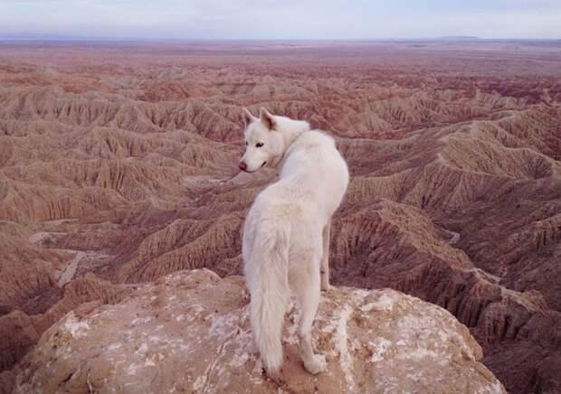 путешествие по США Джона Шторца и его собаки Вольфа (19)