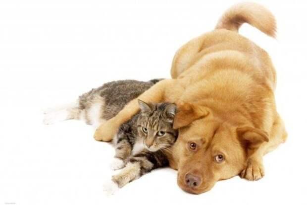 Когда кот решил прокормить всю нашу семью: меня, себя и пса Бакса Спасибо. От души насмеялась!