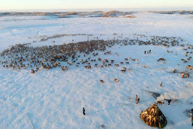 Таймыр: распробовать Арктику