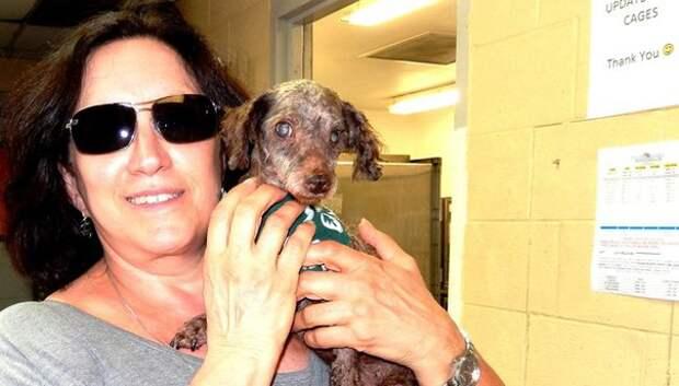 Слепого пса взяла добрая душа и подарила ему любовь и заботу!