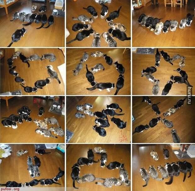 Как фотографировать котиков? (много котиков!)